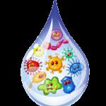 Water Testing bacteria