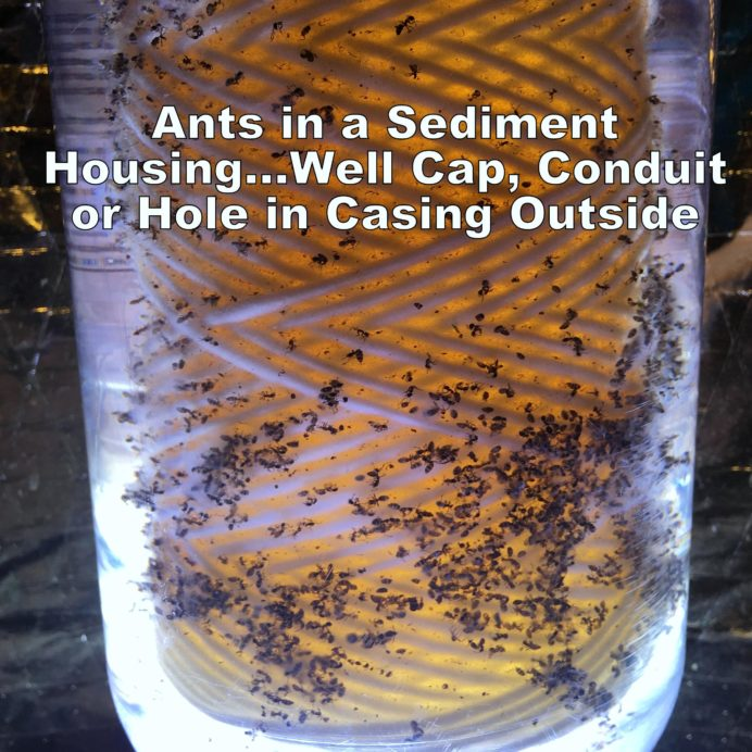 A Whole House Sediment Filter filled with Ants usually means a broken Well Cap, Conduit or a hole in the Well Casing