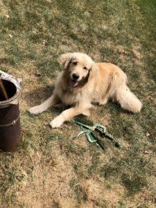 dog assisting well pump crew